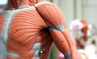 Anatomia e Fisiologia Humana - EAD